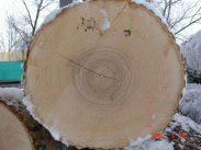 Обзор древесины